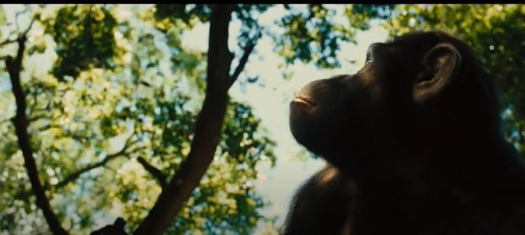 映画|猿の惑星:創世記(ジェネシス)の動画を無料視聴できる配信サイト