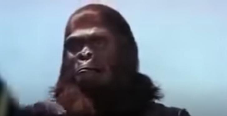 映画|猿の惑星1の動画を無料視聴できる配信サイト