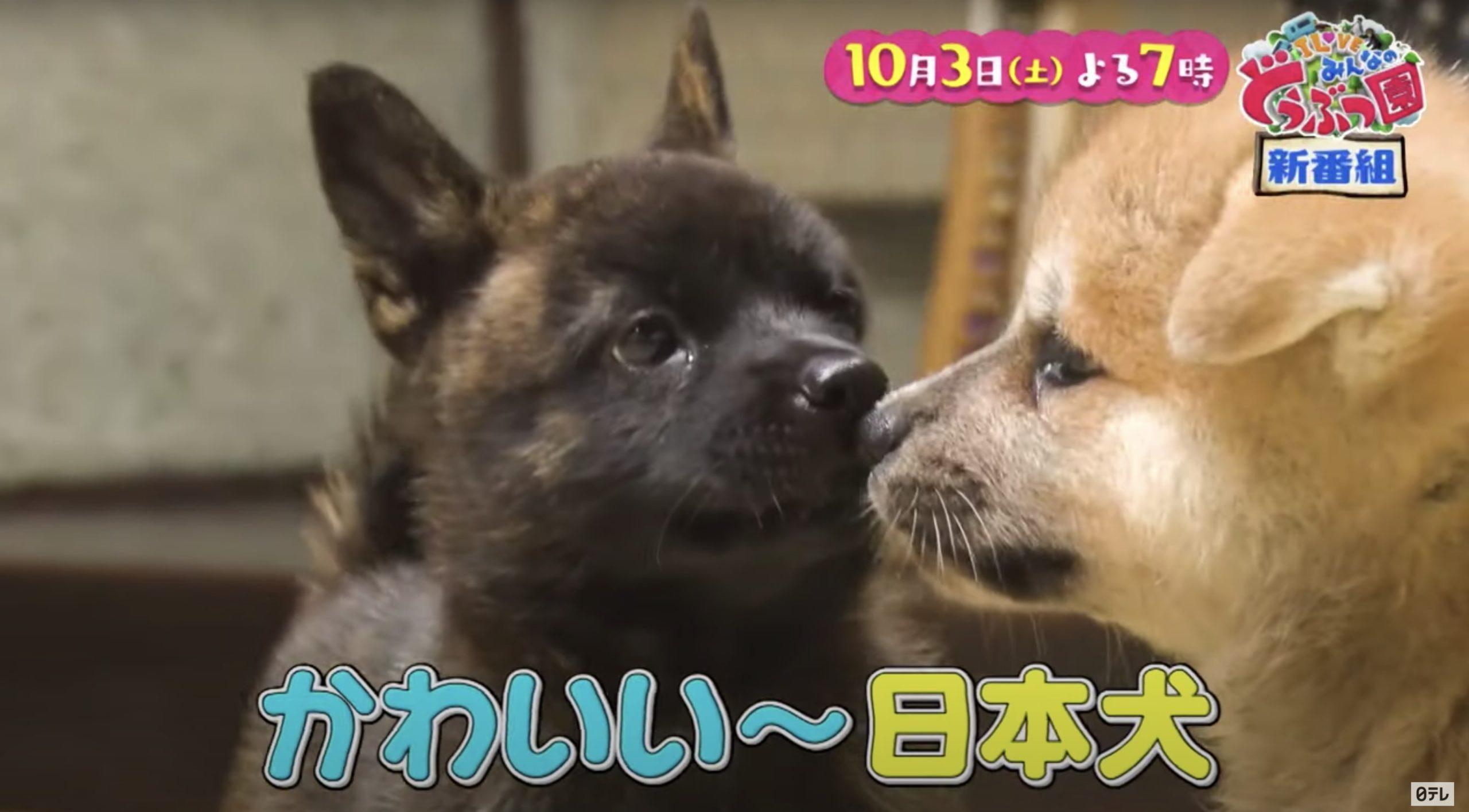 I LOVEみんなの動物園(10月3日)の無料動画や見逃し配信をフル視聴する方法!