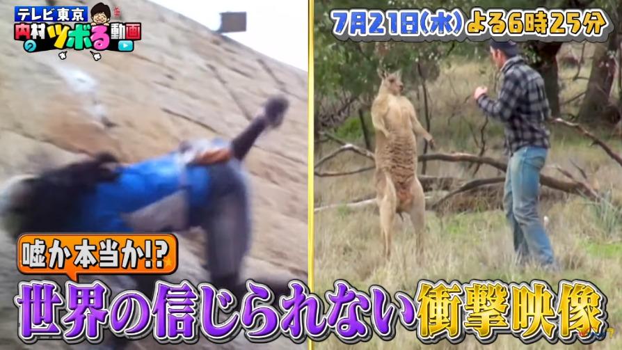 内村のツボる動画(7月21日)の無料動画や見逃し配信をフル視聴する方法!