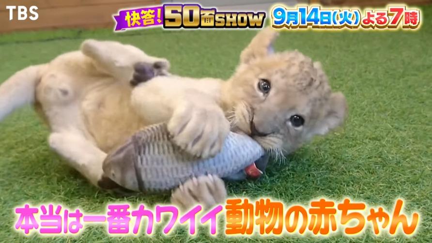 快答!50面SHOW(9月11日)の無料動画や見逃し配信をフル視聴する方法!